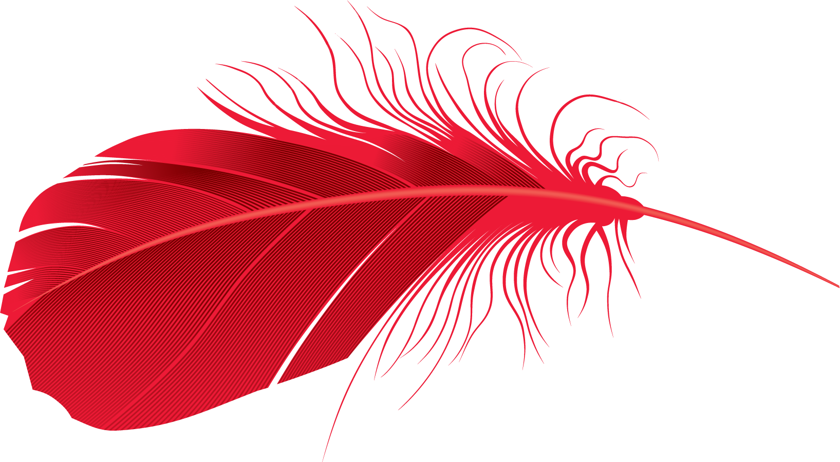 Red feather clipart image black and white download Download red Feather PNG Transparent Image #8 - Free ... image black and white download