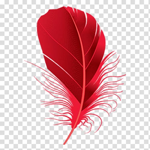 Red feather clipart jpg transparent library Red feather illustration, Feather Red , Red feathers ... jpg transparent library