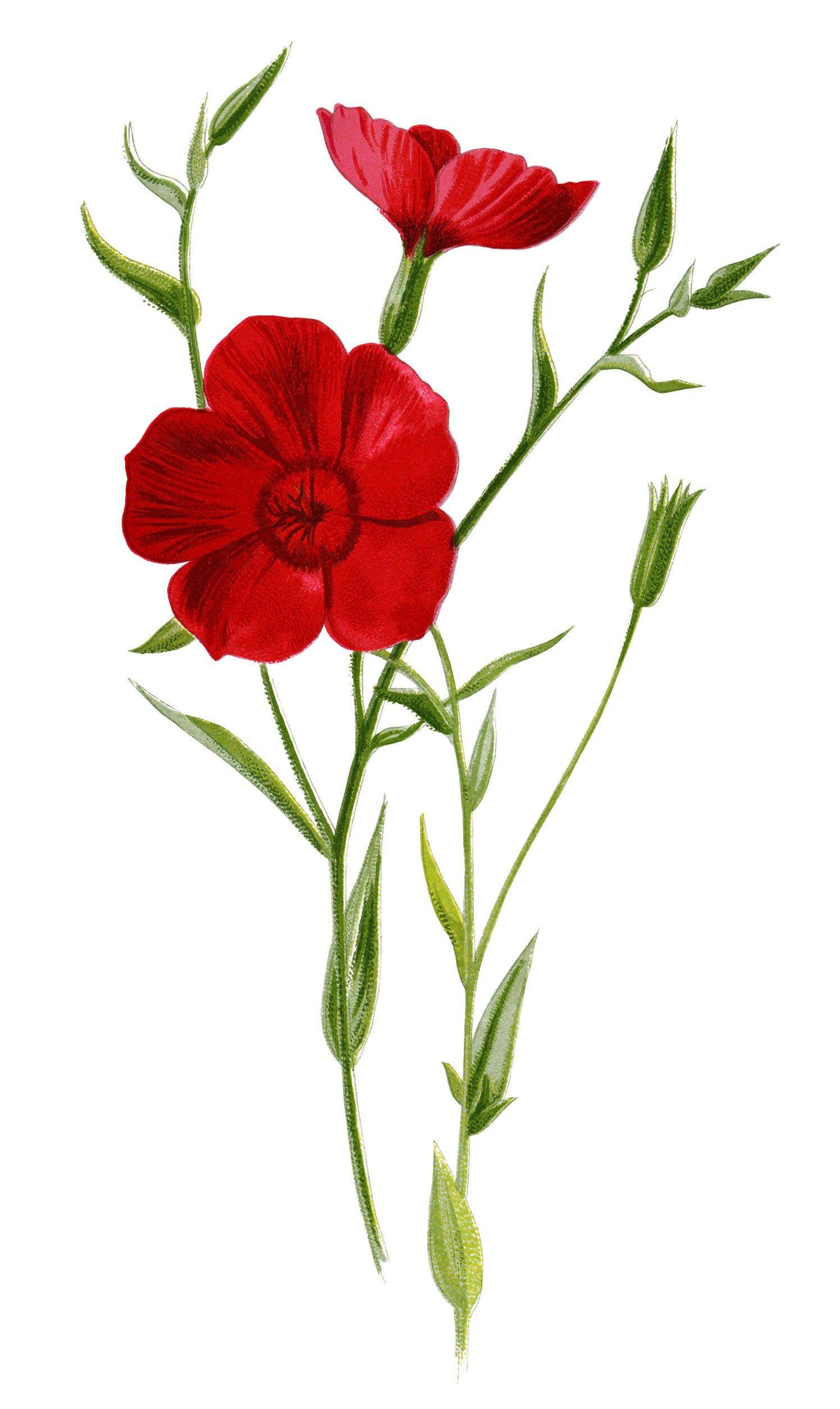 crimson flax, floral clip art, red flower illustration ... jpg freeuse library