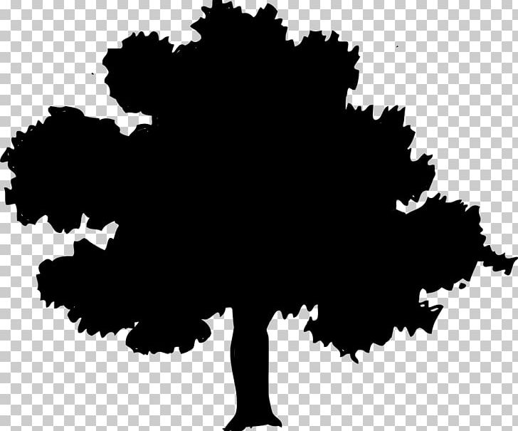 Red oak tree clipart jpg royalty free stock Northern Red Oak Tree PNG, Clipart, Acorn, Black, Black And ... jpg royalty free stock