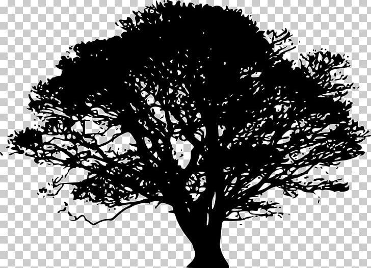 Red oak tree clipart clipart library download Tree Northern Red Oak Drawing PNG, Clipart, Black And White ... clipart library download