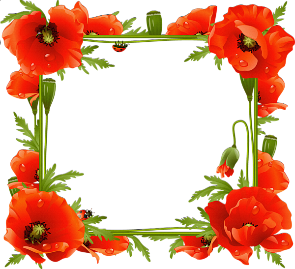 Red poppy floral clipart frame free download picture stock Poppies Transparent Frame   ΠΕΡΙΓΡΑΜΜΑΤΑ   Printable frames ... picture stock
