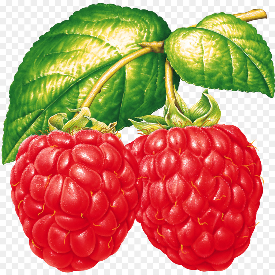 Red raspberry clipart picture royalty free download Honey Background png download - 1200*1189 - Free Transparent ... picture royalty free download