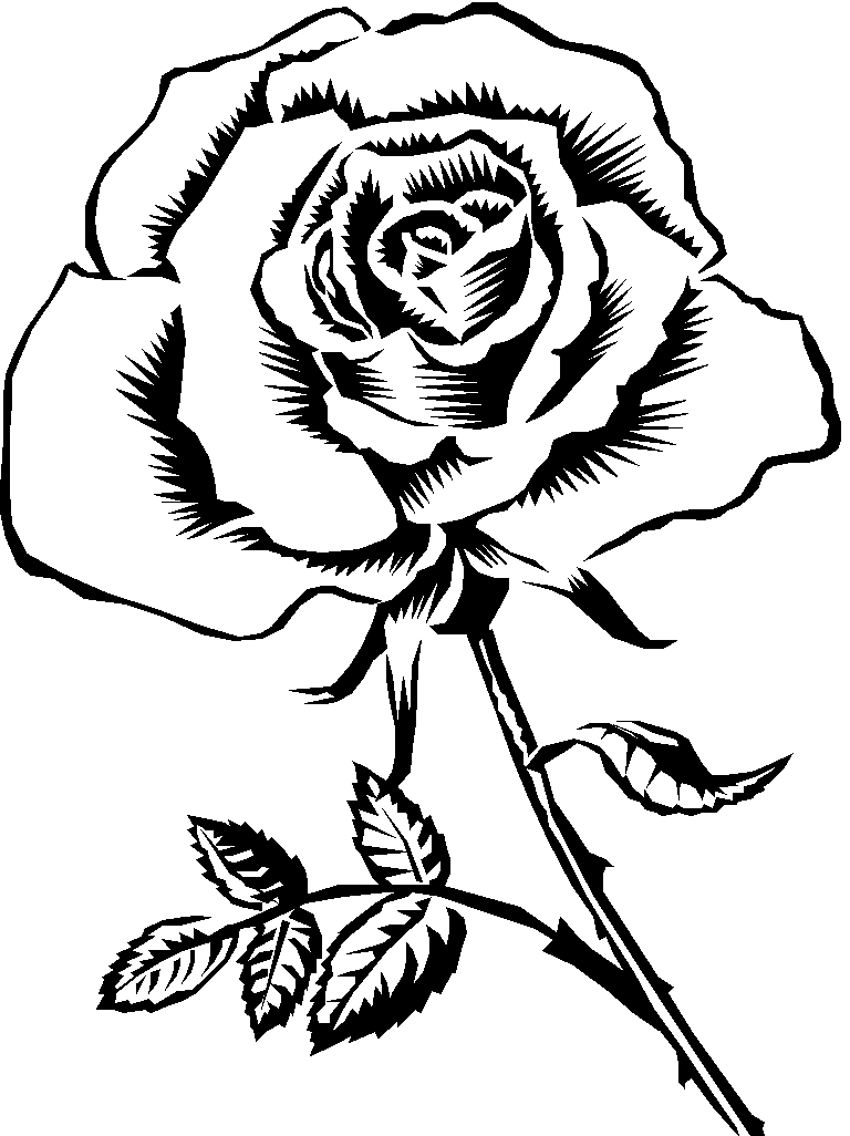 Sketch rose cliparts graphic free stock knumathise: Rose Black And White Outline Images graphic free stock
