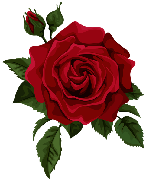 Pin by Chad Oliver on Roses | Red rose drawing, Red roses ... vector freeuse library