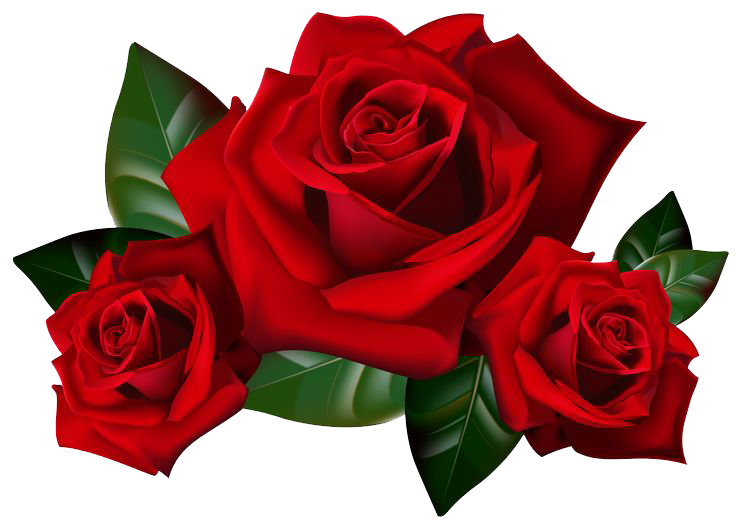 red-rose-flower-free-PNG-transparent-images-free-download ... banner free stock