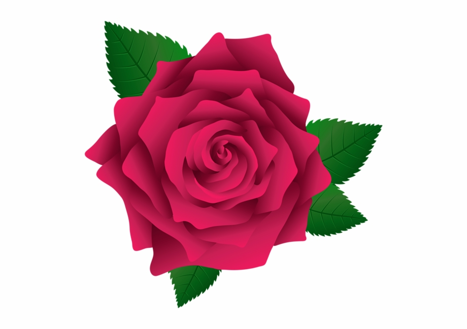 Pink Rose Png, Pink Roses, Vector Flowers, Flower Clipart ... svg library