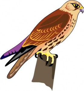 Red shouldered hawk clipart image royalty free Red Tailed Hawk Clipart | Free download best Red Tailed Hawk ... image royalty free
