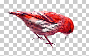 Red sparrow clipart clip free download 106 red Sparrow PNG cliparts for free download | UIHere clip free download