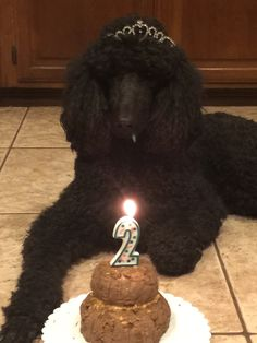 Red standard poodle puppy service dog in gear clipart image black and white download 17 Best Bindy\'s Service Dog Life images in 2018   Dog life ... image black and white download