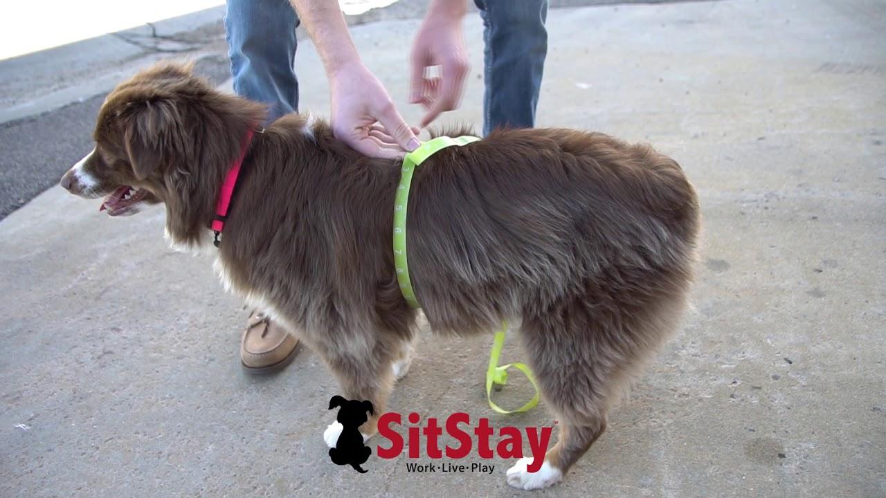 Service Dog In Training Mesh Vest Starter Kit - SitStay clip black and white download