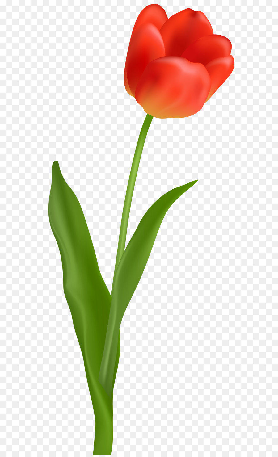 Red tulip clipart png black and white stock Flowers Clipart Background png download - 3531*8000 - Free ... png black and white stock