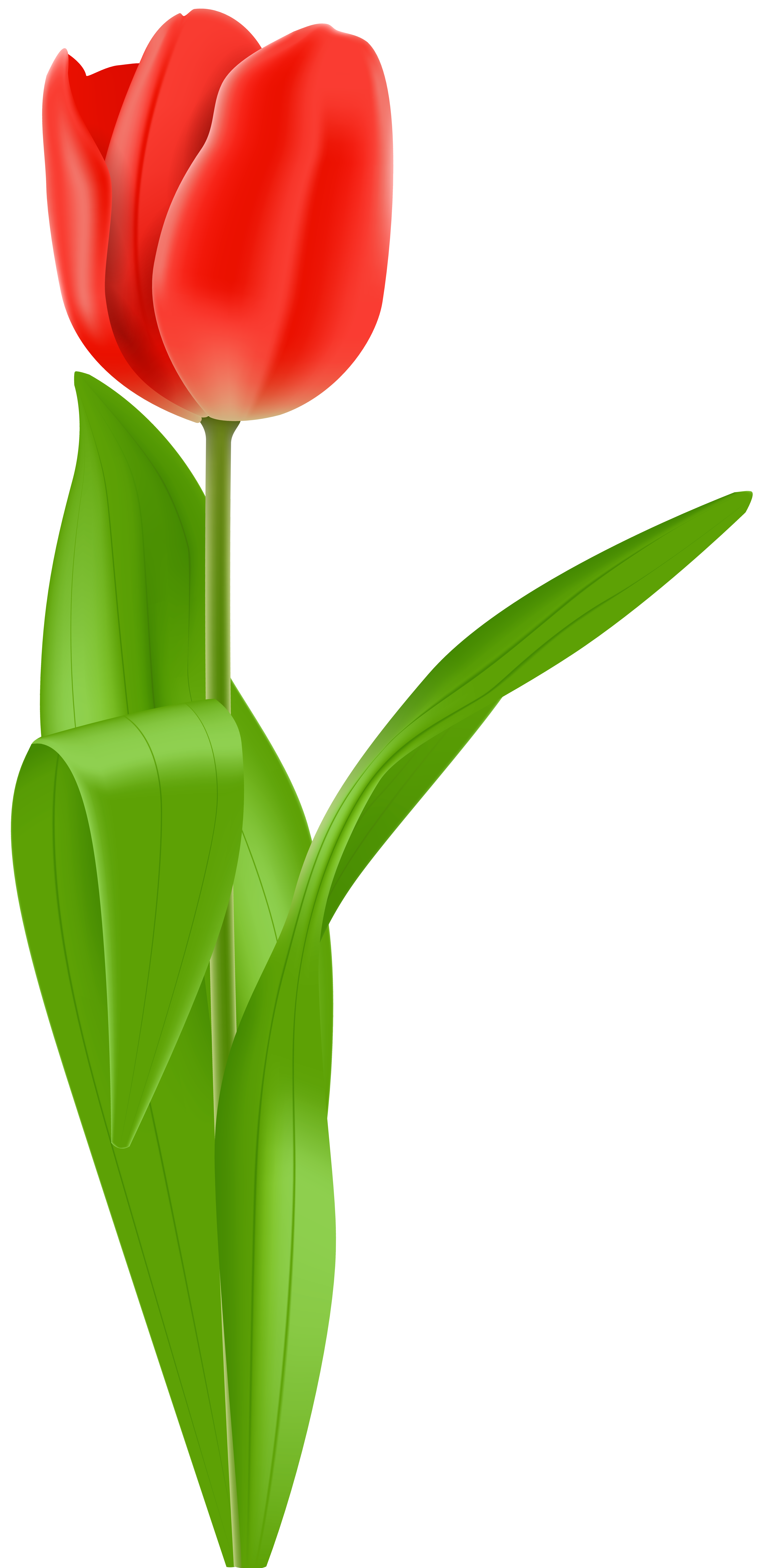 Red tulip clipart vector transparent stock Red Tulip PNG Clip Art Image   Gallery Yopriceville - High ... vector transparent stock