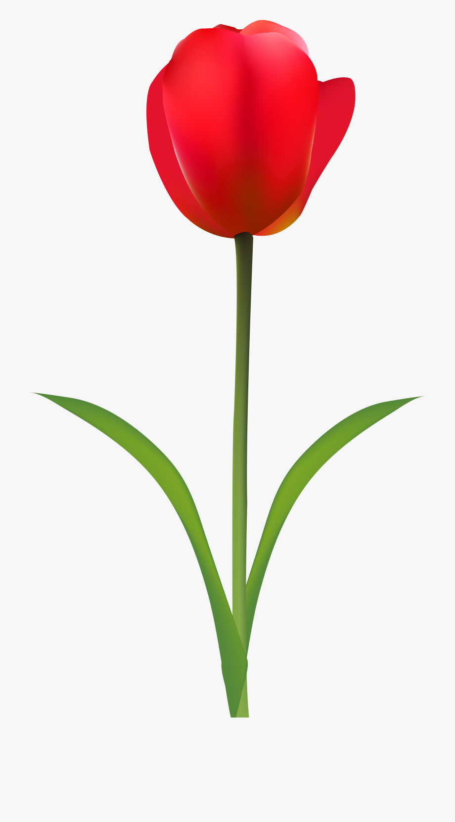Red tulip clipart graphic transparent library Tulip Clipart Transparent Background - Red Tulip Clip Art ... graphic transparent library