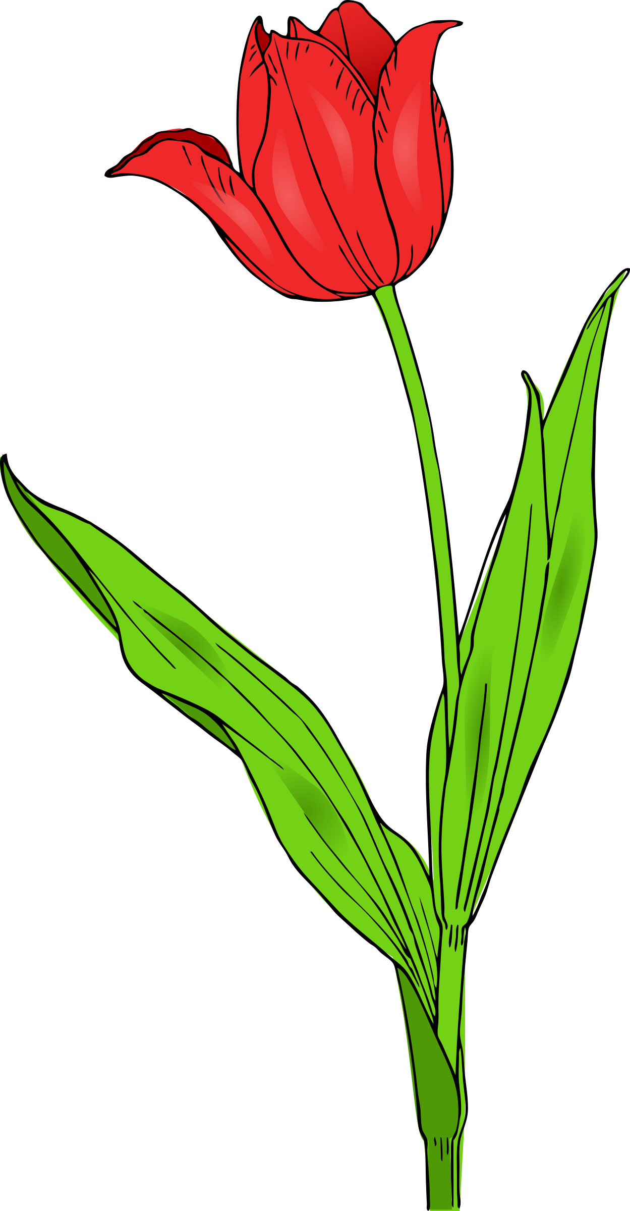 Red tulip clipart banner library stock colored tulip by @pitr, A colored red tulip., on ... banner library stock