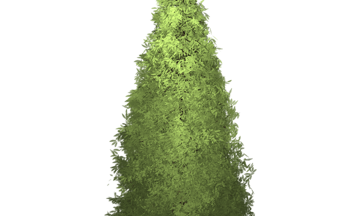 Red wood tree clipart svg royalty free Redwood Leaf Clip Art | Wooden Thing svg royalty free