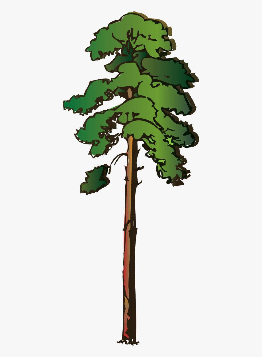 Redwood trees clipart image freeuse Image Result For Cartoon Tree - Redwood Tree Clipart #16379 ... image freeuse
