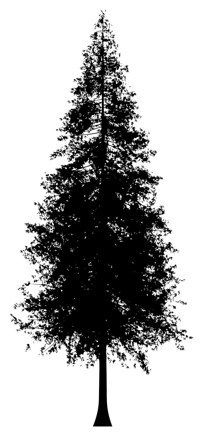 Redwood trees clipart 9 » Clipart Station picture freeuse stock