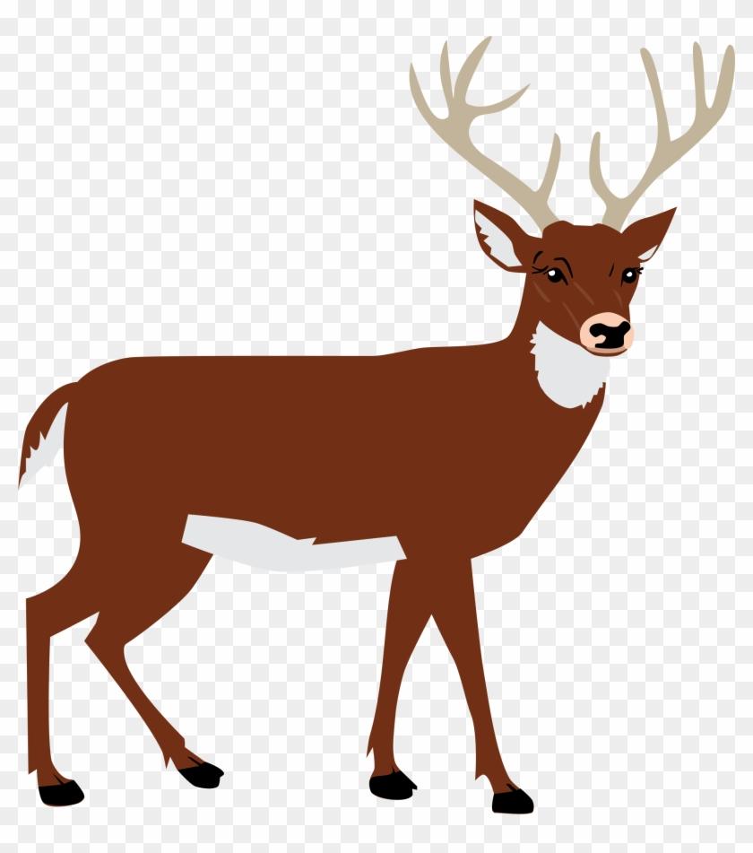 Reindeer tail clipart jpg Mammal,Vertebrate,Deer,Reindeer,Roe deer,White-tailed deer ... jpg