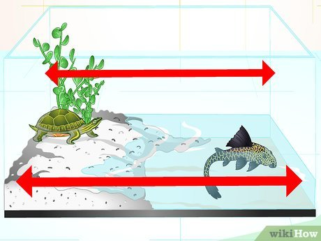Remora fish on sea turtle clipart banner free How to Put a Sucker Fish in a Tank With a Turtle: 14 Steps banner free