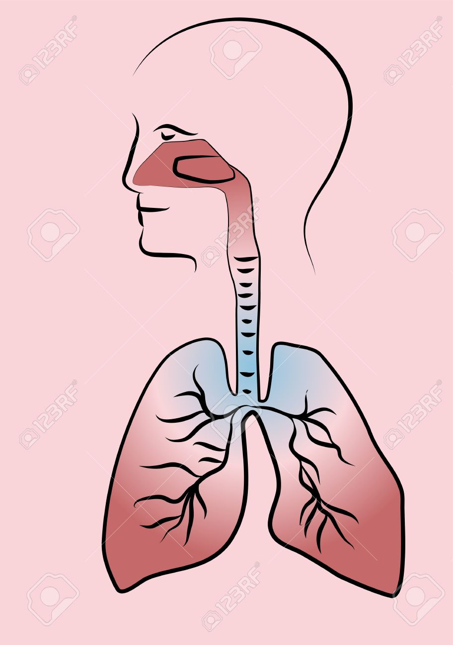 Respiratory system images clipart clipart black and white stock Respiratory system » Clipart Station clipart black and white stock