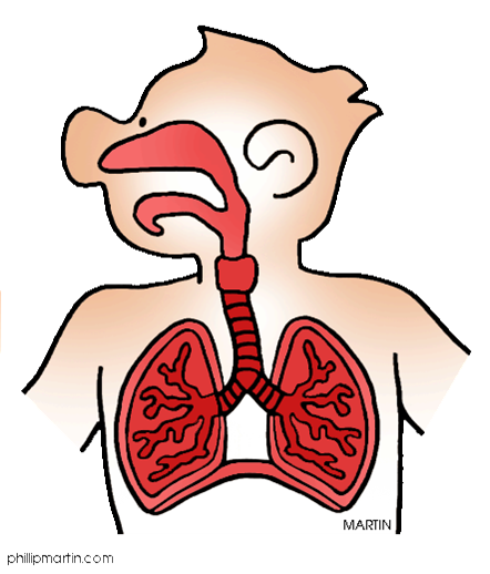 Respiratory system images clipart png free Introduction - The Respiratory System: BodyQuest png free