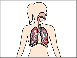 Respiratory system images clipart graphic royalty free stock Clip Art: Human Anatomy: Respiratory System Color Blank I ... graphic royalty free stock