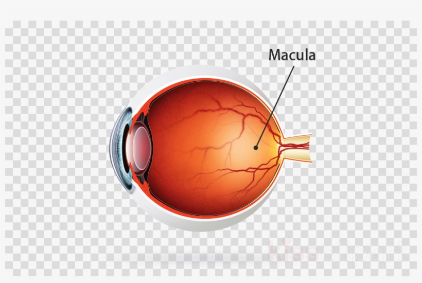 Retina clipart jpg transparent Kodak Uv Blue Lens Clipart Lens Retina Eye - Gold Christmas ... jpg transparent