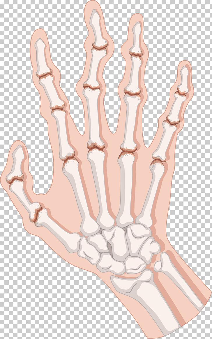 Rheumatoid arthritis clipart clip black and white download Rheumatoid arthritis , Body palm bones, human hand PNG ... clip black and white download