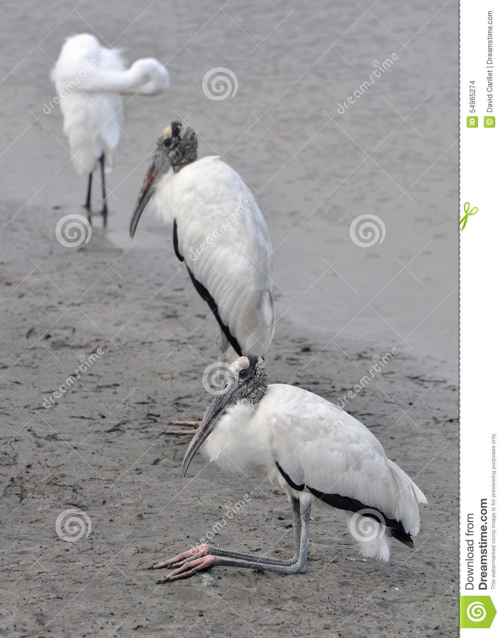 Riverbank state park logo clipart image free download Pair Of Wood Storks Resting At The Edge Of A River At Huntington ... image free download