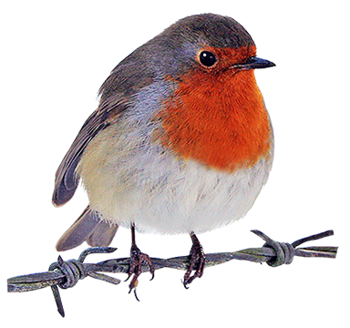 Robin clipart free vector library download Free Robin Cliparts, Download Free Clip Art, Free Clip Art ... vector library download