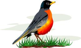 Robin clipart free picture black and white Free Robin Cliparts, Download Free Clip Art, Free Clip Art ... picture black and white