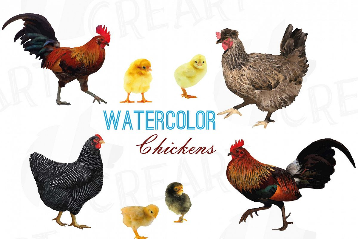 Rooster and hen clipart banner royalty free download Watercolor chickens clip art collection, hen and rooster banner royalty free download