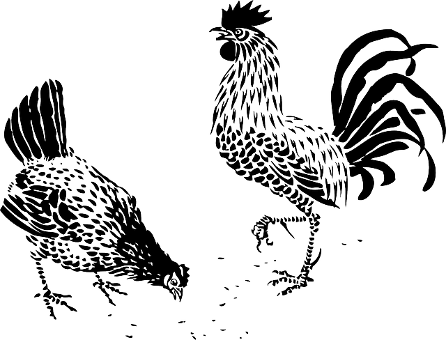 Rooster and hen clipart svg black and white library animals, tribal, cartoon, farm, rooster, hen, fighting ... svg black and white library