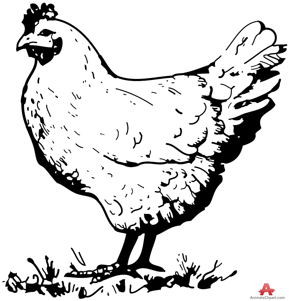 Rooster clipart black and white cartoon picture Chicken Vintage Clipart Black And White Clipartfox Png - AZPng picture