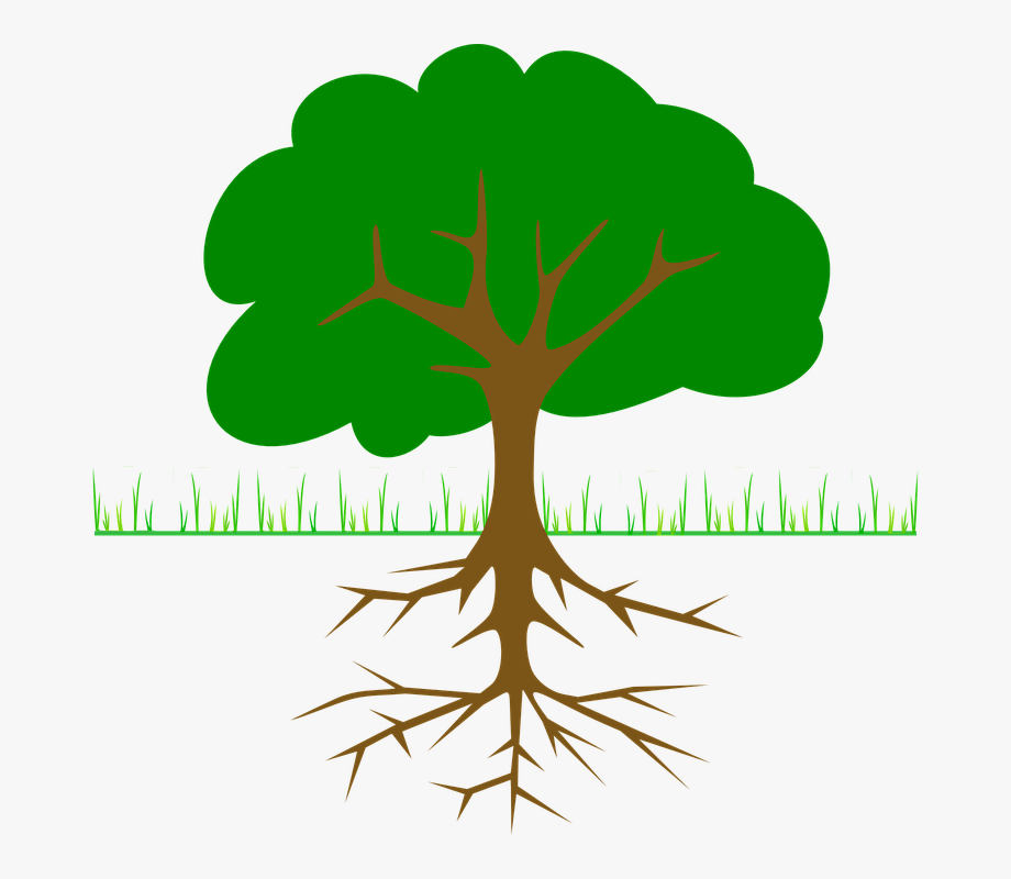 Root clipart banner free library Roots Clipart Tall Tree Stump - Part Of Tree Name #536089 ... banner free library