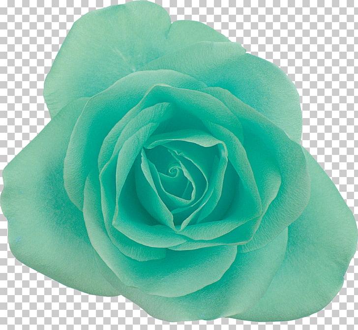 Rosas verdes clipart clipart royalty free stock Jardín rosas centifolia rosas flor azul, verde azul PNG ... clipart royalty free stock