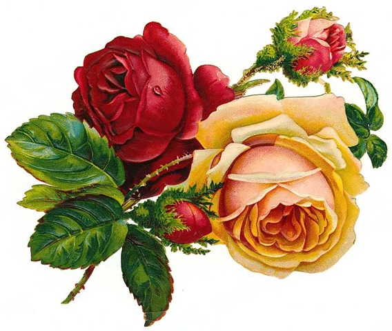 Old roses clipart