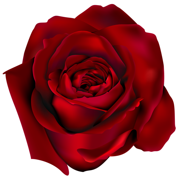 Transparent Red Rose PNG Clipart Picture | Цветы | Pinterest ... png free
