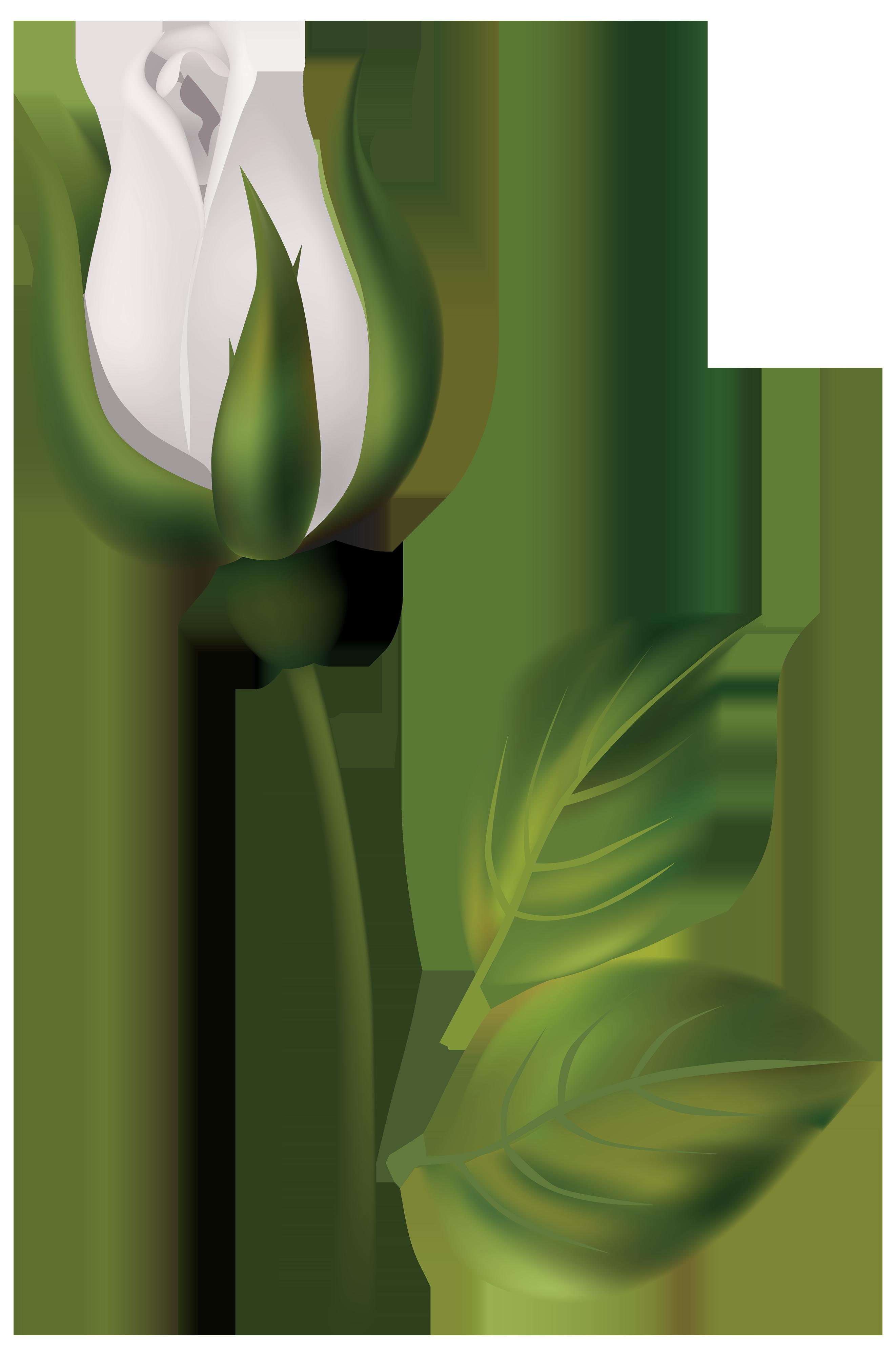 Rose bud clipart clip transparent download White Rose Bud PNG Clipart - Best WEB Clipart clip transparent download