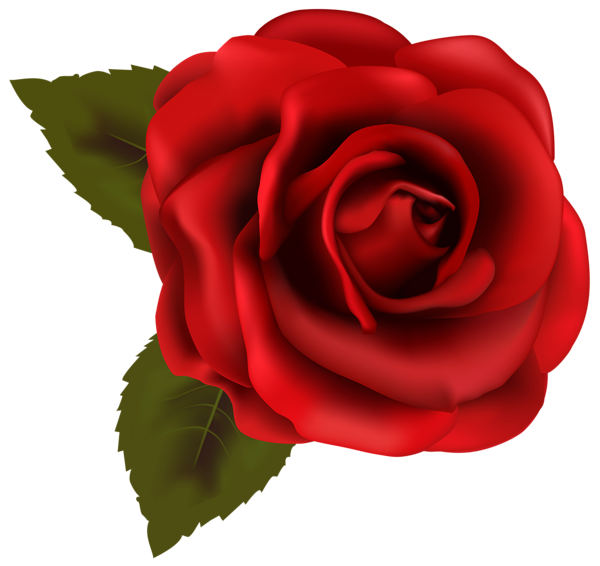 Rose flower clipart clip library stock Beautiful Red Rose Transparent PNG Clip Art Image | Things to Wear ... clip library stock