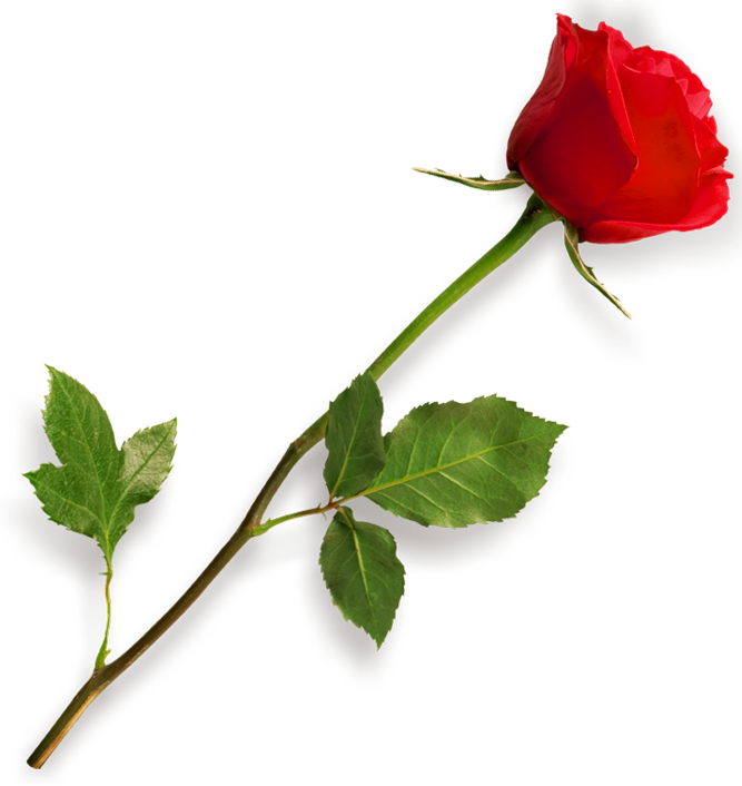Rose flower clipart png picture transparent library Rose flower clipart png - ClipartFest picture transparent library