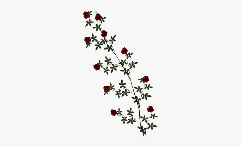 Rosevine clipart clip art free download Rose Clipart Vine - Black Rose Vine Png #243065 - Free ... clip art free download