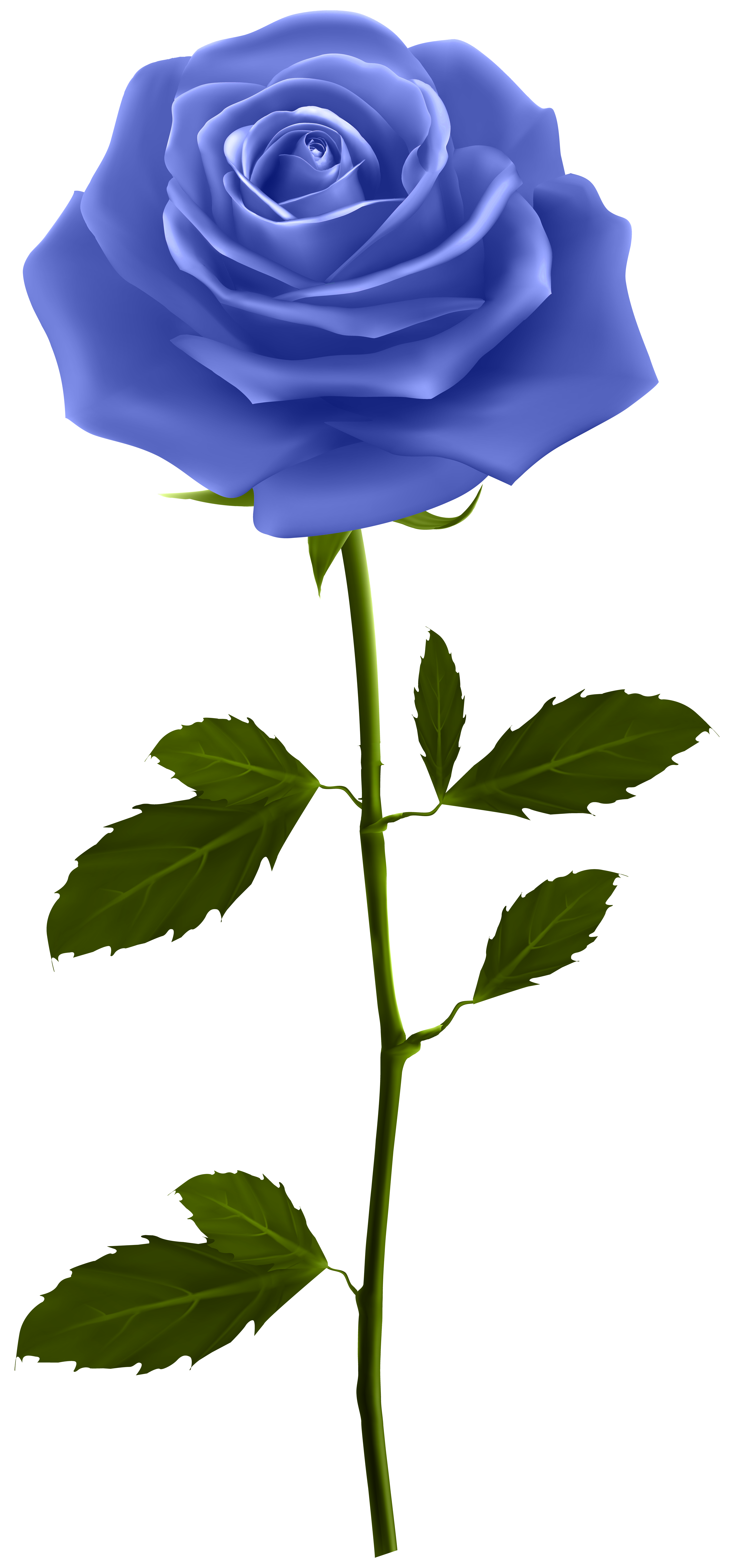 Rose with stem clipart png freeuse library Blue Rose with Stem PNG Clip Art Image   Gallery ... png freeuse library