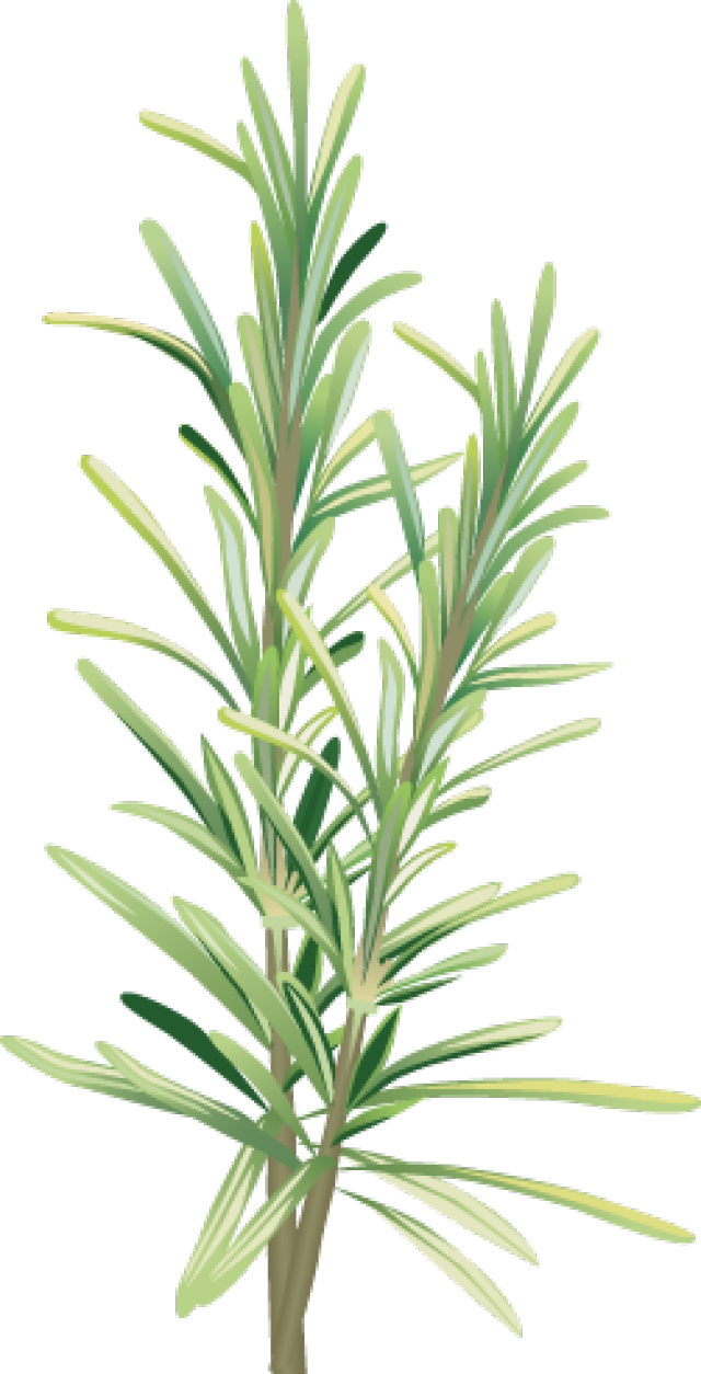 Rosemary flower clipart png library Graphic Design | Pinterest | Clip art and Tattoo png library