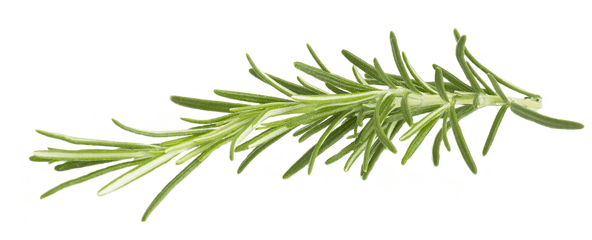 Rosemary flower clipart clipart freeuse library Rosemary transparent PNG - StickPNG clipart freeuse library