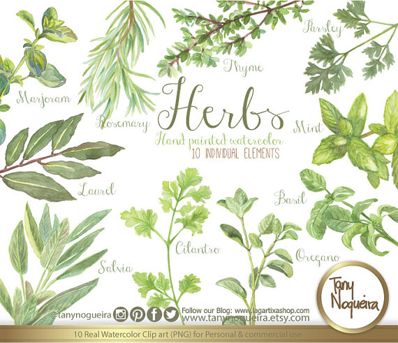 Rosemary thyme and oregano clipart picture library download Vintage Herbs, Watercolor, Shabby Chic, botanical, rosemary ... picture library download