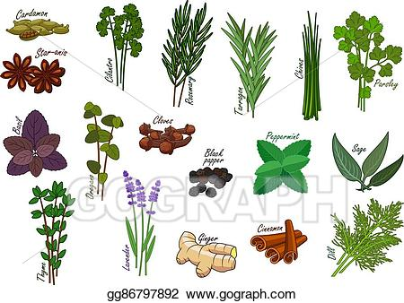 Rosemary thyme and oregano clipart vector transparent EPS Illustration - Spice and kitchen herb, condiment ... vector transparent