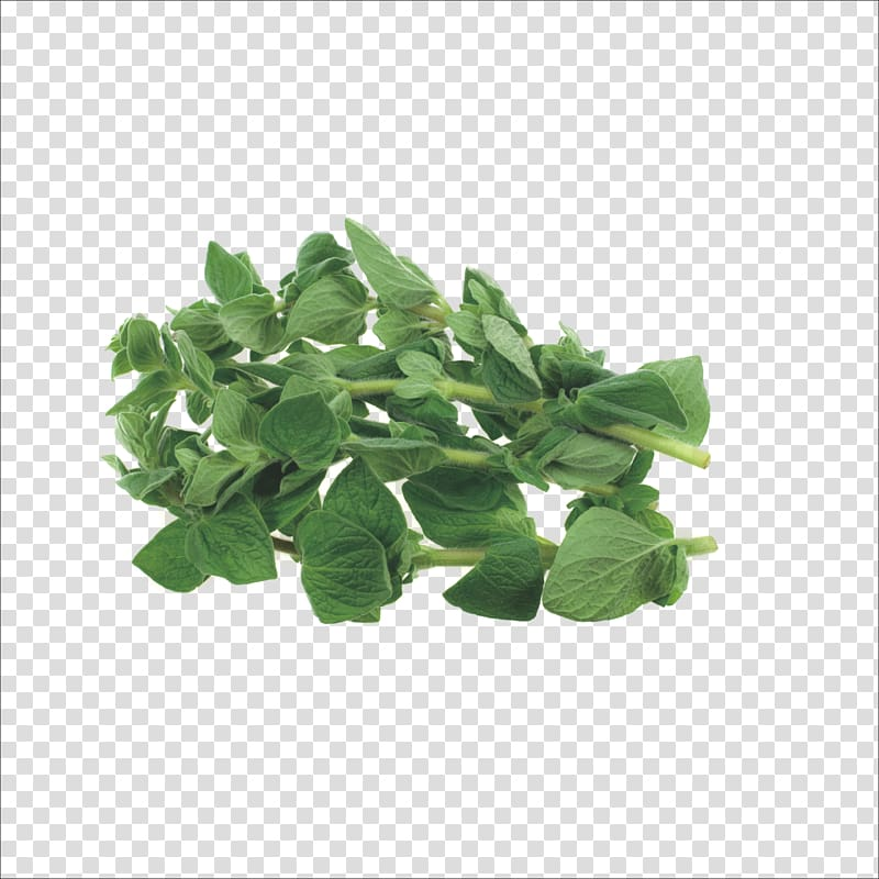 Rosemary thyme and oregano clipart svg Herb Oregano Marjoram Thyme, Herbs transparent background ... svg