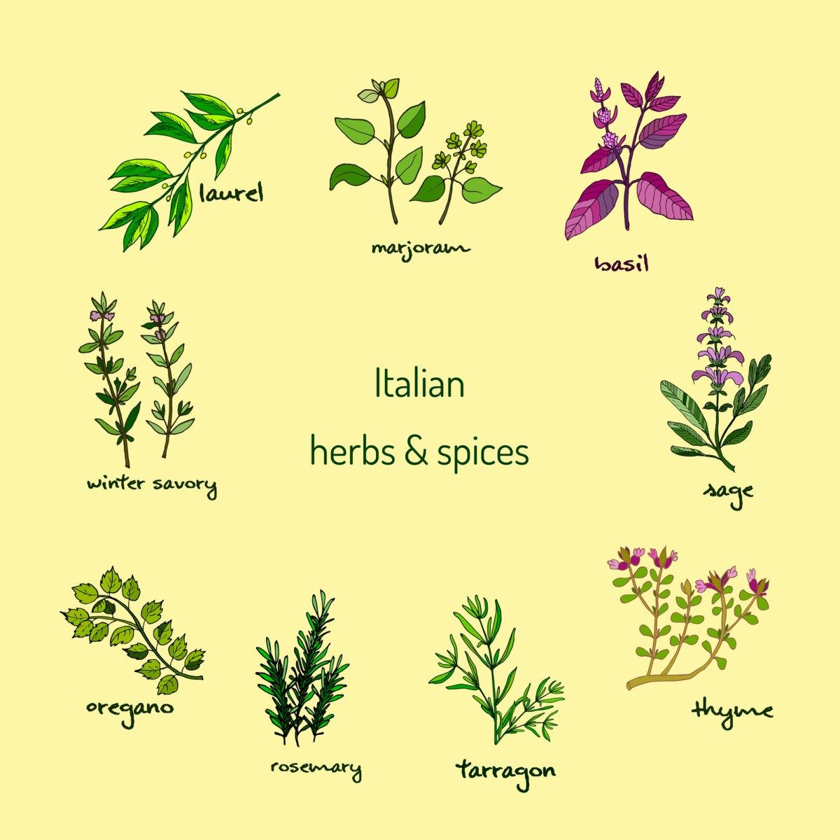 Rosemary thyme and oregano clipart vector black and white Italian herbs and spices - winter savory, laurel, marjoram ... vector black and white